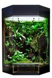 Terrarium voor tropisch regenwoudhuisdier stock afbeeldingen
