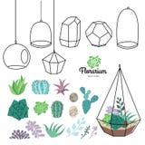 Terrariums вектора стеклянные при красивые установленные succulents Стоковое Фото