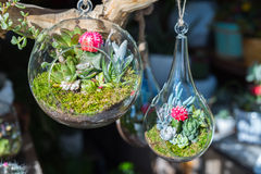 Terrariums inside clear glass jars. Close up of terrariums inside clear glass jars royalty free stock images