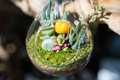 Terrariums inside clear glass jars. Close up of terrariums inside clear glass jars stock image