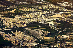 Terras in de het toenemen zonneschijn Royalty-vrije Stock Foto's