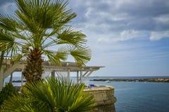 Terras met palmtree Royalty-vrije Stock Foto's