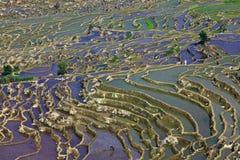 Terras in zonneschijn Royalty-vrije Stock Fotografie