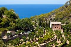 Terrases in Banyalbufar in Mallorca Stock Photos