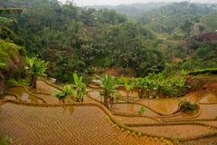 Terrases del riso Fotografia Stock Libera da Diritti