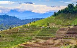 Terraslandbouw op tropische berg Royalty-vrije Stock Fotografie