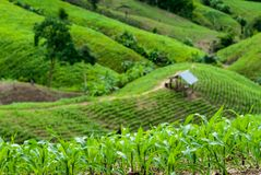 Terraspadievelden in Mae Chaem District Chiang Mai, Thailand Stock Afbeeldingen