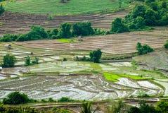 Terraspadievelden Mae Chaem District Chiang Mai, Thailand Stock Foto