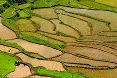 Terraspadievelden op een eiland Sulawesi in Indonesië Royalty-vrije Stock Foto