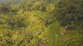Terraspadievelden in Ubud, Bali, Indonesië Stock Afbeelding