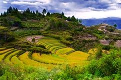 Terrass av korn. Fotografering för Bildbyråer
