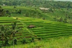 terrass för bali fältindonesia rice Fotografering för Bildbyråer