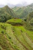 terrass för paddyrice Royaltyfria Bilder