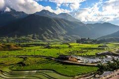 Terrass i Sapa Vietnam Royaltyfri Bild