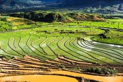 Terrass i Sapa Vietnam Royaltyfria Foton