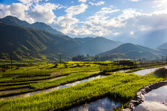 Terrass i Sapa Vietnam Arkivfoto
