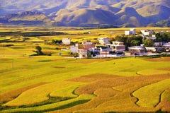 Terrass på det guizhou porslinet royaltyfri bild