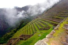 Terrass på Machu Pichu Arkivfoton