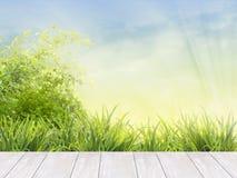 Terrasse blanche de conseils en bois dans le jardin Photo stock