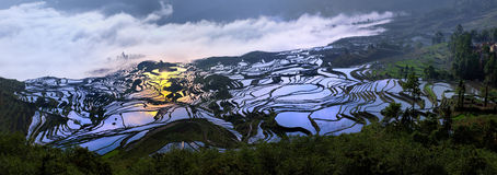 Terrasse China-Yunnan Hani Stockfotografie