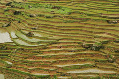 Terrasse chinoise de Fubao (9) Image stock