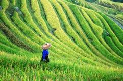 Terrasse dans Guangxi photographie stock libre de droits