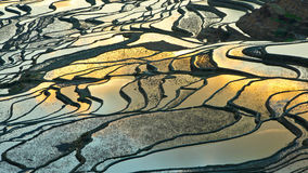 Terrasse dans le lever de soleil 4 Image libre de droits