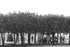 Terrasse de Bruhlsche en Dresden Fotografía de archivo libre de regalías