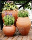 Terrasse de fleur Photo stock