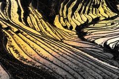 Terrasse de paddy Image libre de droits