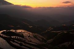 Terrasse de riz Images libres de droits