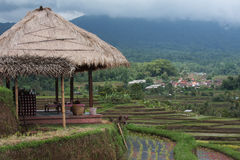 Terrasse de riz. Image libre de droits