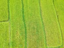 Terrasse de riz au secteur Chiang Mai Province, Thaïlande de lanière de Chom de parc national de Doi Inthanon en vue la vue aérie Images libres de droits
