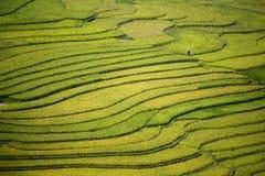 Terrasse de riz au Vietnam Photos stock