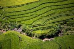 Terrasse de riz au Vietnam Photo stock