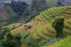 Terrasse de riz au Vietnam Photographie stock libre de droits