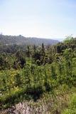 Terrasse de riz dans Bali, Indonésie avec des cultures Photographie stock libre de droits