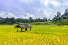 Terrasse de riz dans Thialand Photos stock