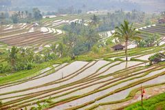 Terrasse de riz de Jatiluwih un jour pluvieux Image stock