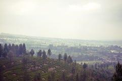 Terrasse de riz de montagne de parapentiste, Bali Photos libres de droits