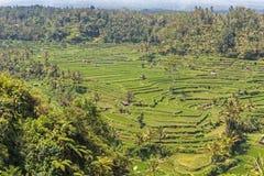 Terrasse de riz de Tegalalang Photos libres de droits