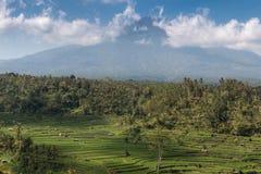 Terrasse de riz et agung de volcan Photos libres de droits