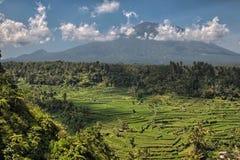Terrasse de riz et agung de volcan Photographie stock libre de droits