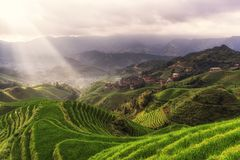 Terrasse de riz de Longji Photo libre de droits