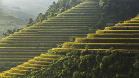 Terrasse de riz sur le moutain au Vietnam Photo stock