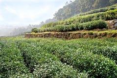 Terrasse de thé Image libre de droits