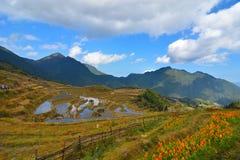 terrasse de yunhe dans Lishui Images stock