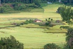 Terrasse des Reises Thailand stockbild