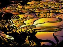Terrasse-Reis-Feld-Auszugs-Muster stock abbildung