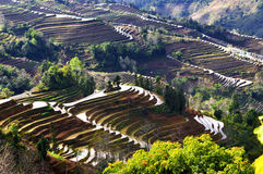 terrasse yunnan de hani de porcelaine photographie stock libre de droits